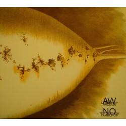 LAMBCHOP awcmon - nonoyoucmon COFFRET 2 CD 2004 RARE EX++